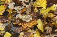 Fallen autumn leaves with raindrops